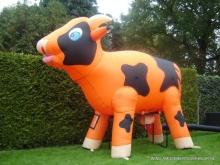 ranja-koe